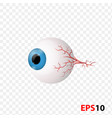 eye human internal vision organ vector image vector image