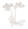 phalaenopsis orchid hand drawn sketch vector image