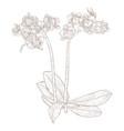 phalaenopsis orchid hand drawn sketch vector image vector image