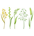 set of herbs and cereal grass floral collection vector image vector image