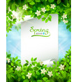 spring branch with fresh green leaves on the blue vector image vector image