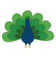 beautiful peacock on white background vector image vector image
