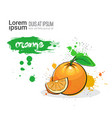 orange hand drawn watercolor fruit on white vector image vector image
