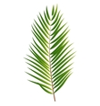 Palm Tree Leaf Silhouette Isolated on White vector image