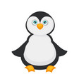 penguin bawith big blue eyes and plump belly vector image