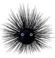 urchin vector image vector image