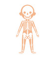 boy body anatomy with skeleton system vector image