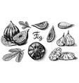 fresh figs set detox spice dried fruit cut vector image vector image