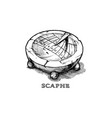 hand drawn of scaphe vector image vector image
