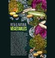 sketch poster of natural fresh vegetables vector image vector image