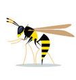 biting wasp vector image vector image