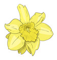 color sketch of yellow flower vector image
