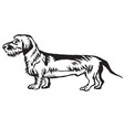 decorative standing portrait of dachshund vector image vector image