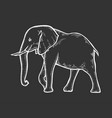 elephant hand drawn vector image