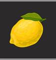 fresh lemon whole citrus fruit vector image vector image