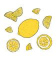 hand-drawn of lemon vector image vector image