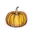 ink sketch pumpkin vector image