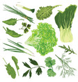 edible greens on a white background vector image vector image