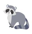 funny raccoon sitting vector image vector image