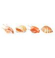 set of seashells vector image vector image