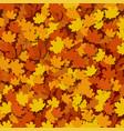 autumn foliage background a large amount vector image