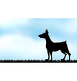 Silhouette greyhound on the field vector image vector image