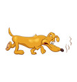 cartoon of a funny bloodhound dog with disgust vector image