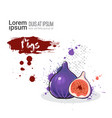 fig hand drawn watercolor fruit on white vector image vector image
