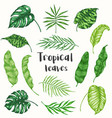 set tropical palm leaves vector image