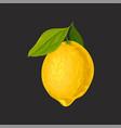 whole fresh lemon sour citrus fruit vector image vector image