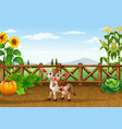 cartoon cow in the farm vector image vector image