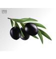 isolated olives three black olive fruits on a vector image