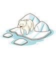 polar bear standing on ice on white background vector image