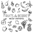 set of fruits and berries vector image