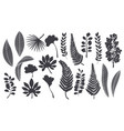 silhouettes tropical leaves vector image