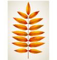 Single autumn rowan leaf vector image vector image