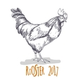 Rooster Cock in Vintage hand drawn vector image