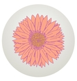 Beautiful gerbera flower vector image