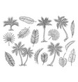 sketch palm tree tropical rain forest trees and vector image vector image
