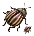 Striped colorado potato beetles pests of plants vector image
