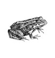 hand drawn common water frog vector image vector image