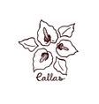 Handsketched bouquet of callas vector image