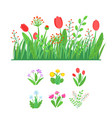 spring garden blooming flowers with grass border vector image