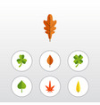 flat icon foliage set of aspen hickory maple and vector image vector image