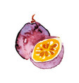 juicy ripe chrysophyllum fruit watercolor hand vector image