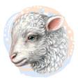 lamb artistic hand-drawn color portrait vector image vector image