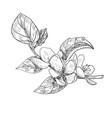 sketch twig sakura blossoms vector image vector image
