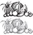 texture images of fruit vector image