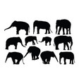 elephant activity silhouettes vector image vector image