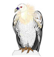 fantasy cute vulture on white background vector image